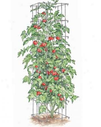 Tomato Towers, Set Of 2