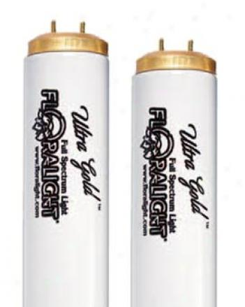 Extreme Gold T-12, 2'bulbs, 2 Pack