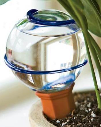 Watering Buln