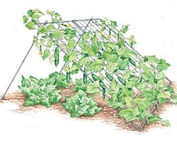 Wire Cucumber Trellis