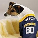 Collegiate Dog Jerseys