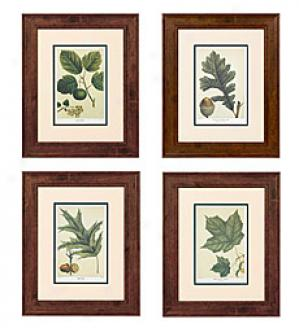 Leaf Prjnts, Set Of 4