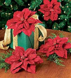 Poinsettia Clips, Set Of 3