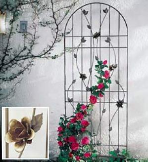 Roses Trellis