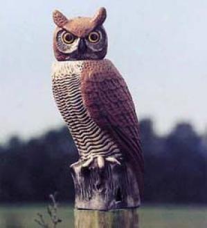 Scare Owl
