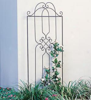 Scroll Iron Trellis