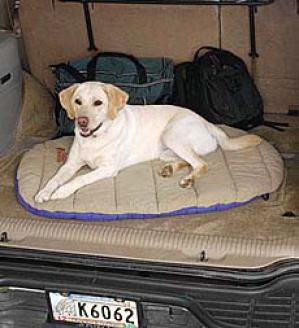 Journeying Pet Bed